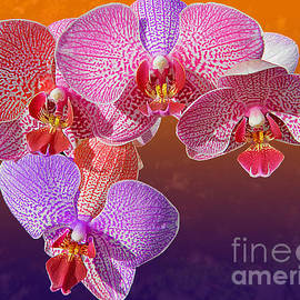 Emmy  Marie Vickers - Tricolor Orchids 2