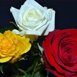 James Pinkerton - Trio of Roses