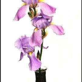 Marsha Heiken - Triplet Irises