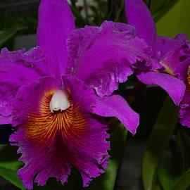Linda Covino - Tropical beauty