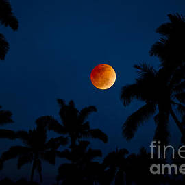 Tropical Blood Moon - Sean Davey