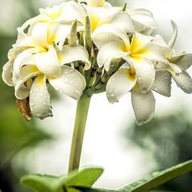 Jijo George - Tropical Flower 5