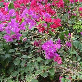 John Malone - Tropical Garden