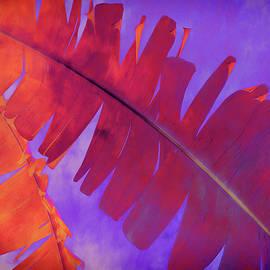 Ann Powell - Tropical Heat