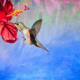 Lynn Bauer - Tropical Passion Blue