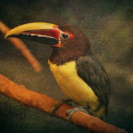 Maria Angelica Maira - Tropical Rainforest Toucan