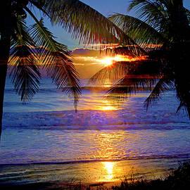 Lynn Bauer - Tropical Sunrise Silhouettes