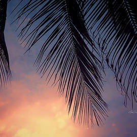 Ann Powell - Tropical Twilight - photography