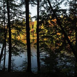 Georgia Mizuleva - Trough the Pine Screen - Hidden Lake in an Autumn Forest
