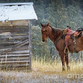 Inge Johnsson - Trusty Horse