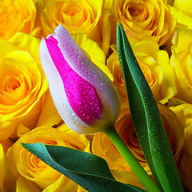 Tulip And Yellow Roses - Garry Gay