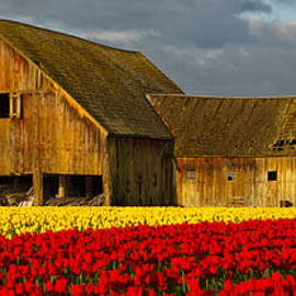 Reflective Moment Photography And Digital Art Images - Tulip Barn