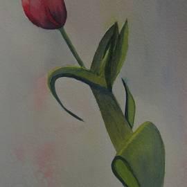 David Bartsch - Tulip