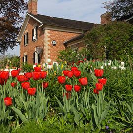 Georgia Mizuleva - Tulip Garden - Marvelous Spring with Red Tulips