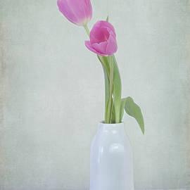 Kim Hojnacki - Tulip Love
