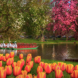 Joann Vitali - Tulips and Swan Boats in the Boston Public Garden