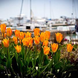 Milena Ilieva - Tulips by the Harbor