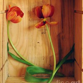 Georgia Sheron - Tulips In Box Study 2