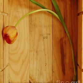 Georgia Sheron - Tulips In Box Study 6
