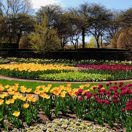 Teresa Schomig - Tulips in the Spring