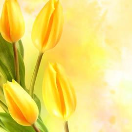 Tulips in Yellow - Mark Rogan