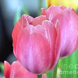 Janice Drew - Tulips