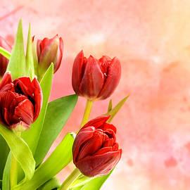 Tulips - Mark Rogan