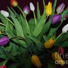 Oksana Semenchenko - Tulips