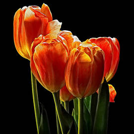 Susan Williams - Tulips