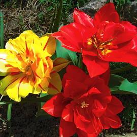 Vesna Martinjak - Tulips