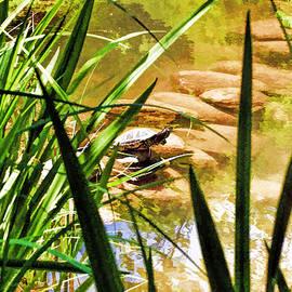 Geraldine Scull   - Turtle on rocks