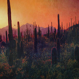 R christopher Vest - Twilight In Saguaro National Park