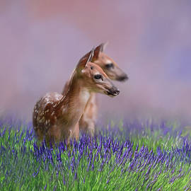 Jai Johnson - Twin Fawns In The Lavender Deer Art by Jai Johnson