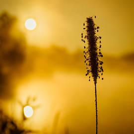 Chris Bordeleau - Twin Suns warm Dew covered grass
