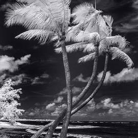 Twisted Palm Trio - Sean Davey