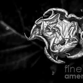 James Aiken - Twisted Petals