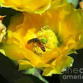 Bob Lentz - Two bees work a yellow cactus flower