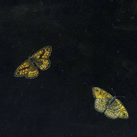 Two Butterflies - Giovanna Garzoni