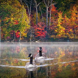 Randall Nyhof - Two Canadian Geese swimming in Autumn