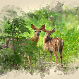 Christina Rollo - Two Deer Fawns Watercolor Art