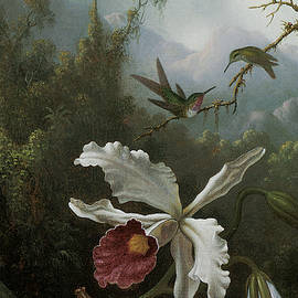 Martin Johnson Heade - Two Hummingbirds Above a White Orchid