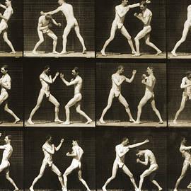 Two men boxing - Eadweard Muybridge