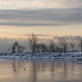 Georgia Mizuleva - Two Swans Sleeping - Serene Winter Lake Scene