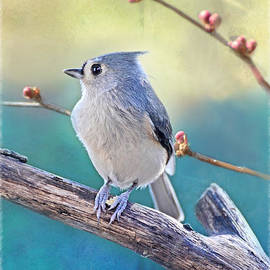 Debbie Portwood - Two Tone Tufted Titmouse 1