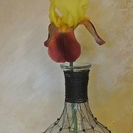 Marsha Heiken - Two Toned Iris