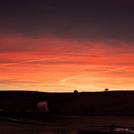 Weston Westmoreland - Two trees and a red sunset