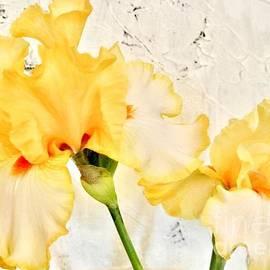 Marsha Heiken - Two Yellow Irises