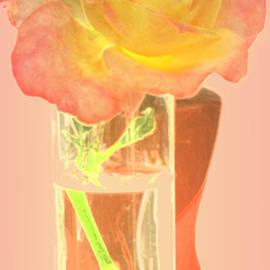 Ian  MacDonald - Umbertos Rose