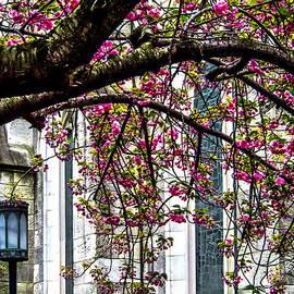 James Aiken - Under the Cherry Tree
