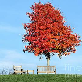 Janice Drew - Under the Foliage Tree